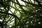 Wald der Gräser