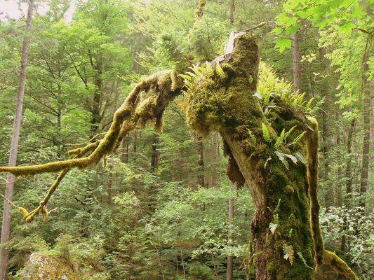 Wald der Trolle ...