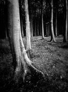 ...........Wald der verlorenen Seelen