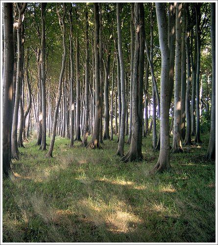 Wald direkt an der Küste