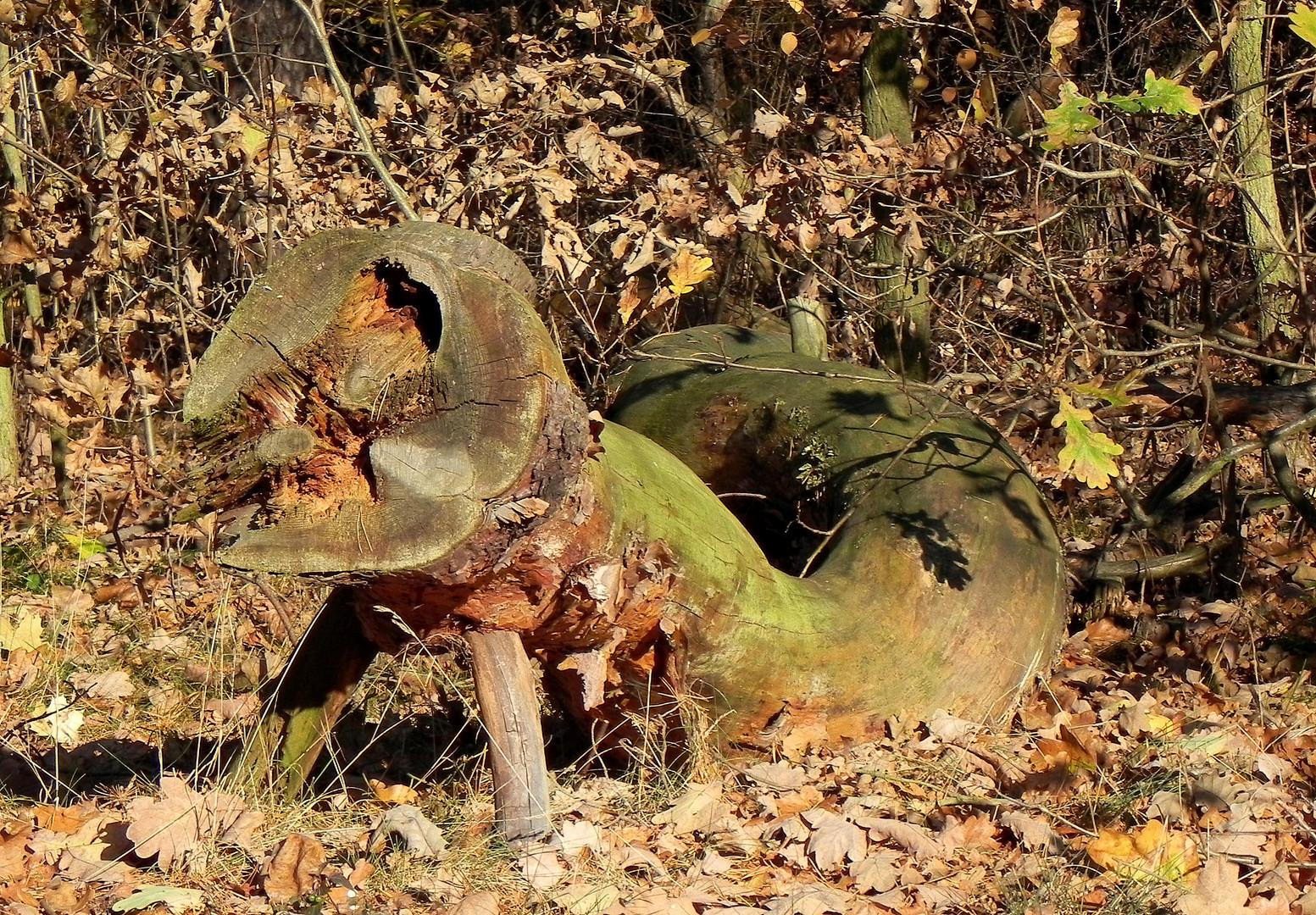 Wald-Echse