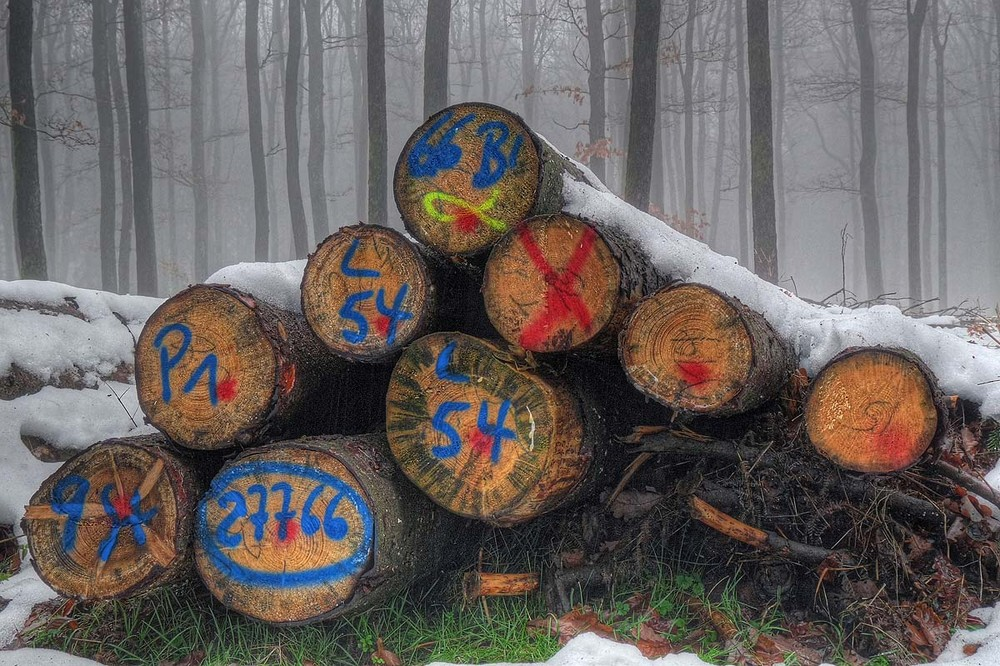 Wald-Graffitti
