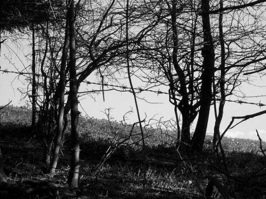 Wald Grenze