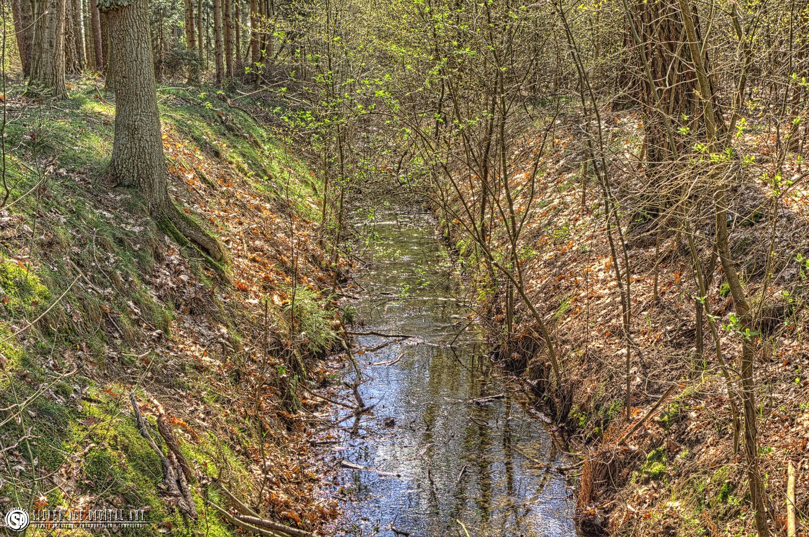 Wald HDR2