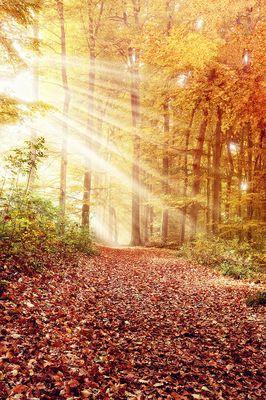 Wald Herbst Bunt