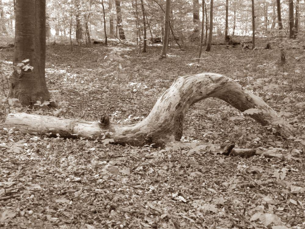 Wald Holz Wald