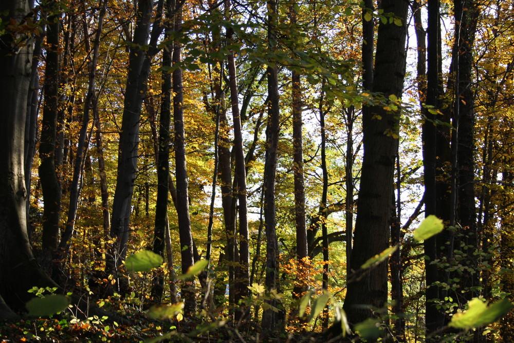 Wald im Abedlicht