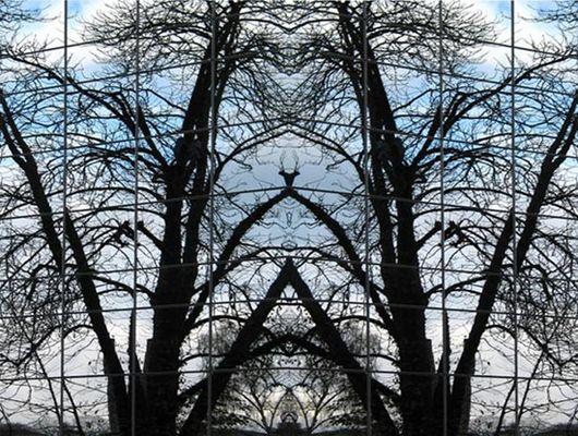 Wald im Fenster