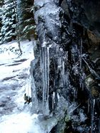 Wald im Frost