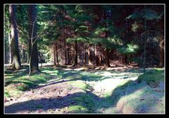 Wald im Frühling (1)