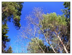 Wald im Frühling (2)