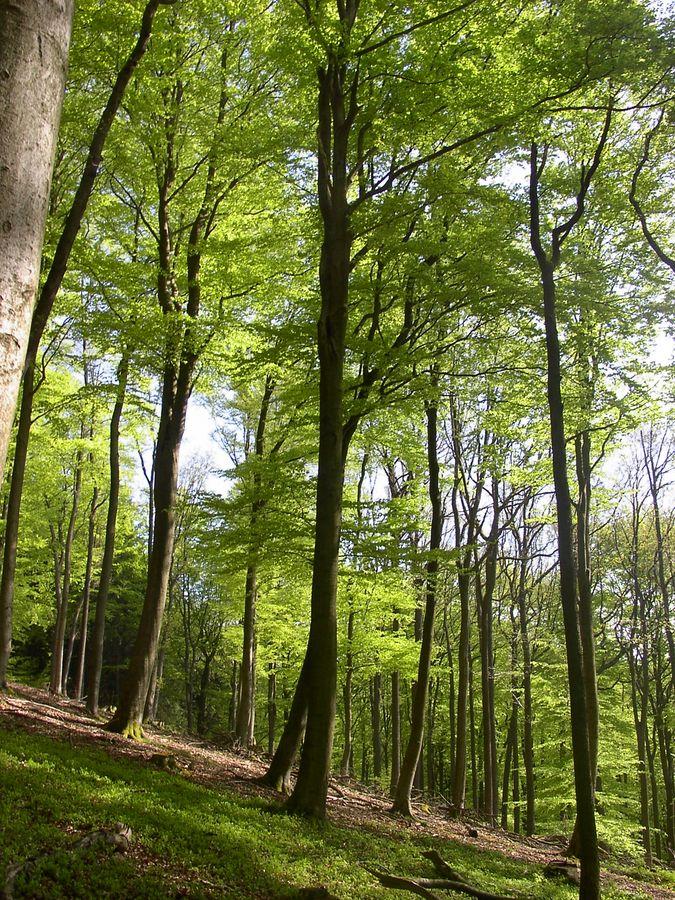 Wald im Mai 2008