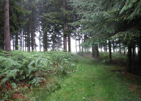 Wald im Regen - Regen im Wald