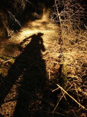 Wald im Schatten des Menschen
