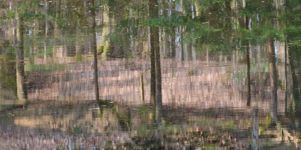 Wald im See
