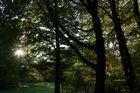 Wald im Sonnenlicht 1