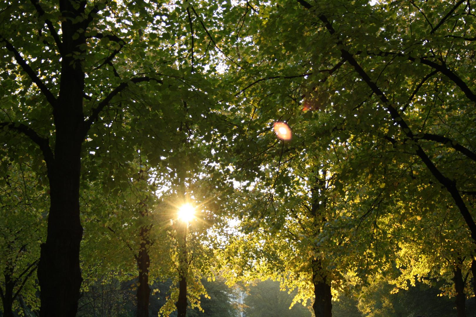 Wald im Sonnenlicht 2