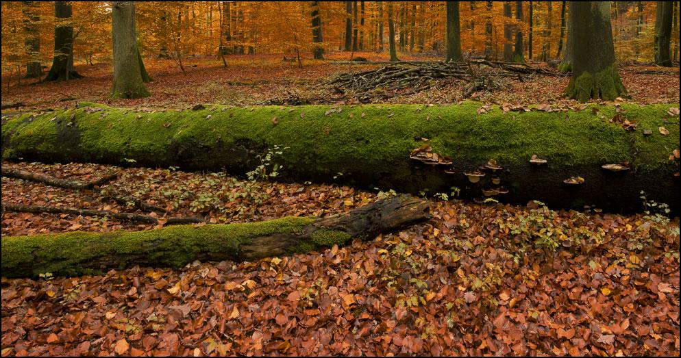 Wald im Sonntagskleid