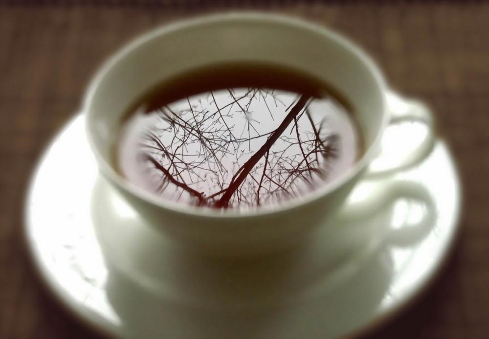 Wald im Tee