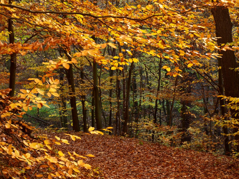 Wald im Übergang