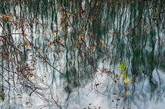 Wald im Wasser