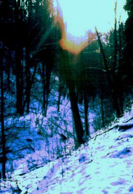 Wald im Winter2