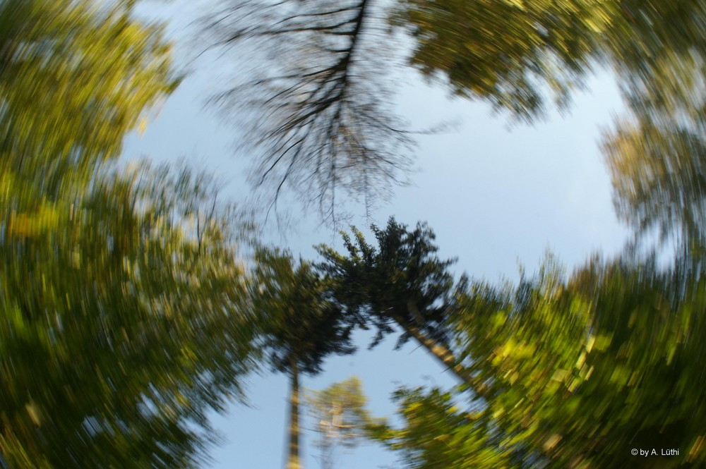 Wald im Wirbel