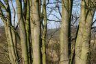 Wald in der Flur