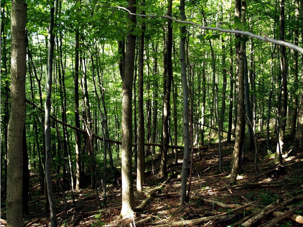 Wald in der Rhön