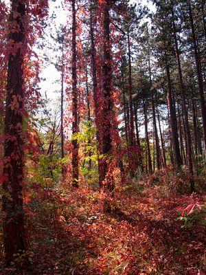 Wald in Flammen