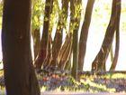 Wald in Kurscheid
