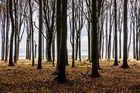 Wald in Nienhagen