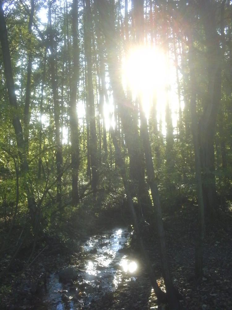 Wald in Steinhagen