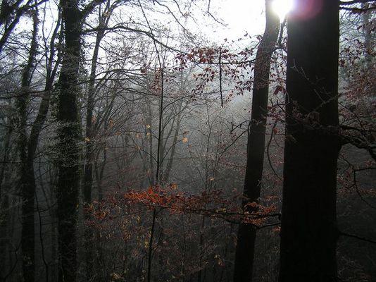 Wald in Winterthur