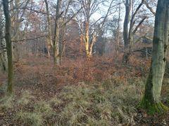 Wald Landschaft 161221_519