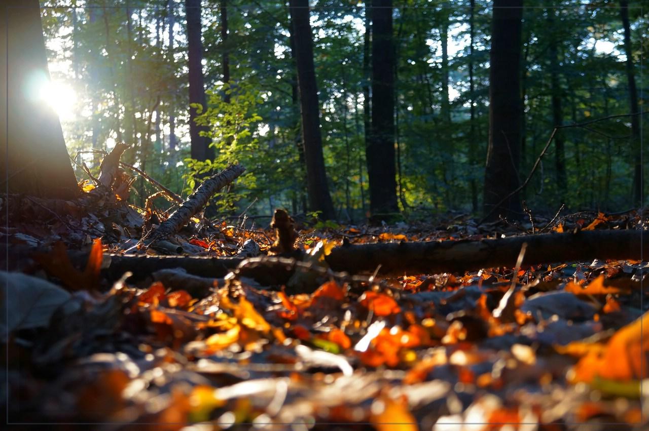 Wald, Laub aber keine Fee