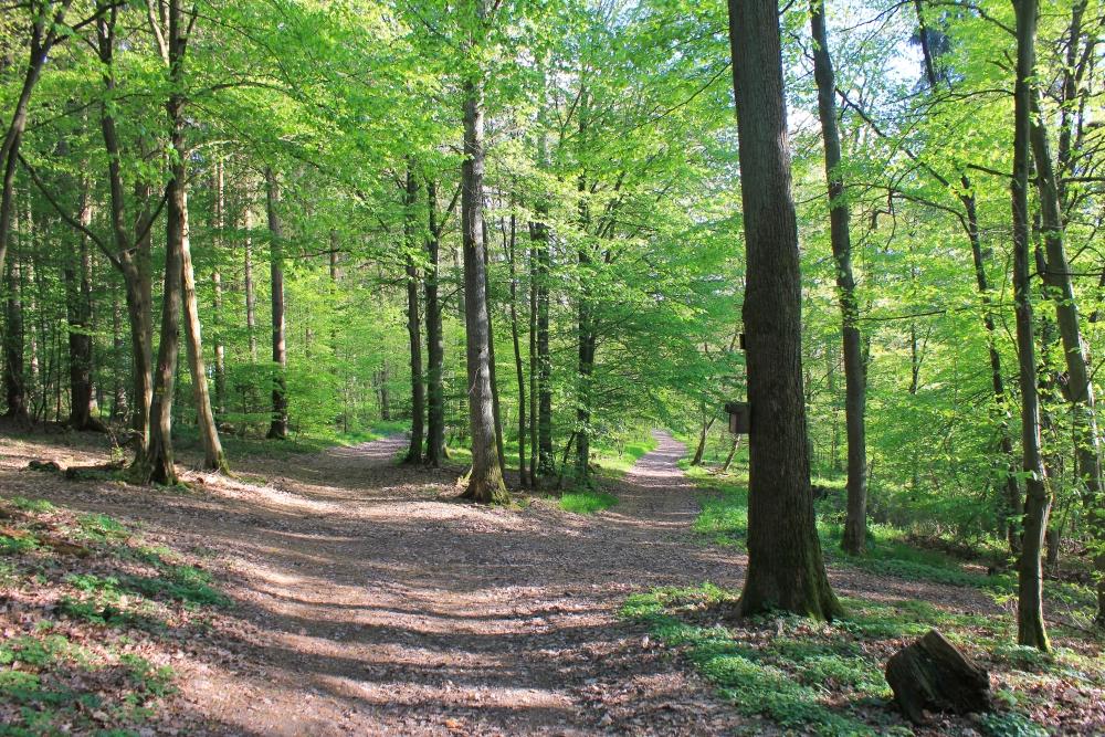 Wald - Launsbach - Frühling 2014