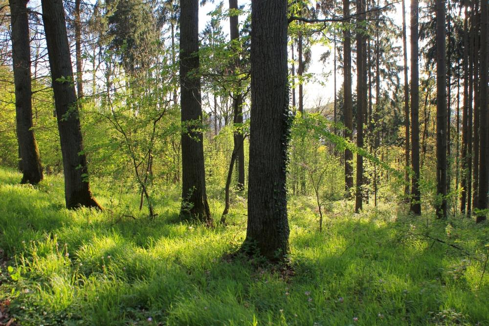 Wald - Launsbach - Frühling 2014 b