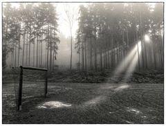 Wald, Licht und Tor