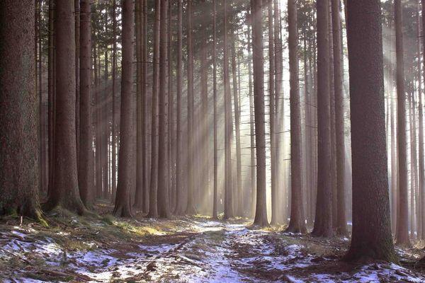 Wald -Lichtung