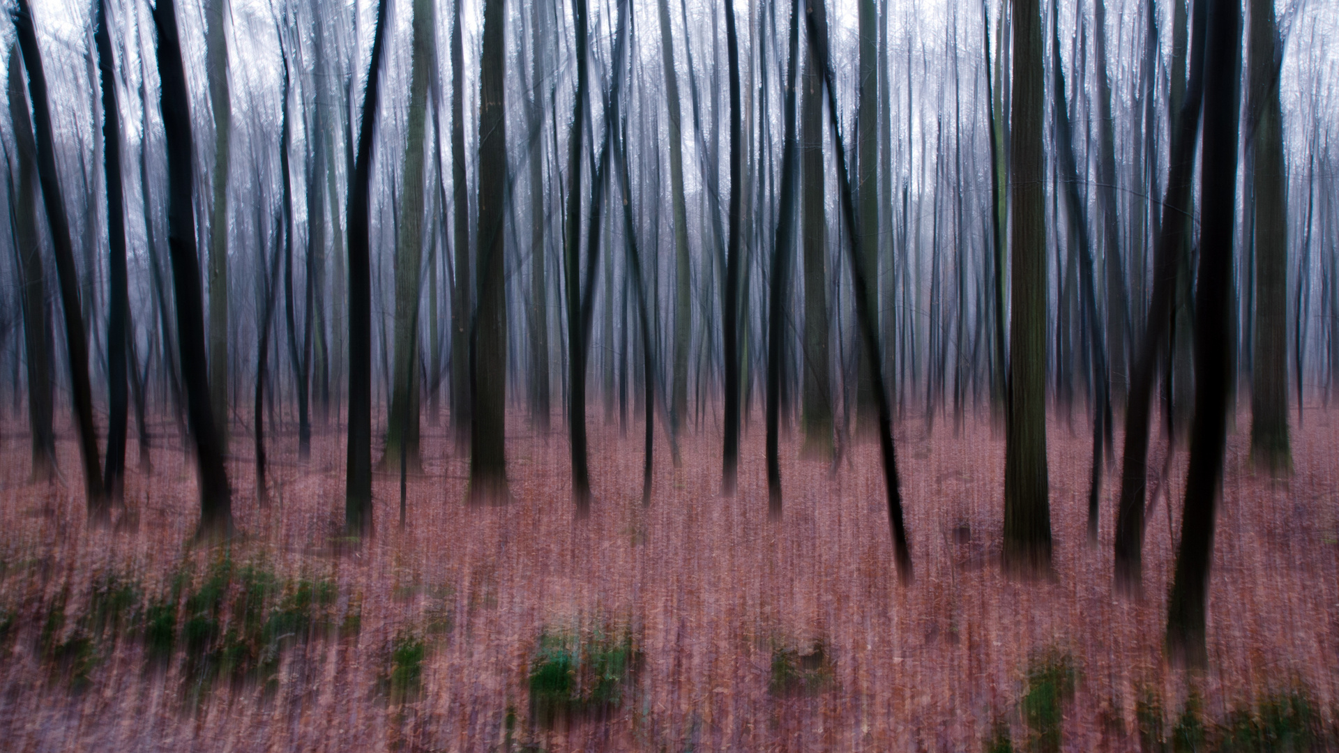 Wald mal anders I