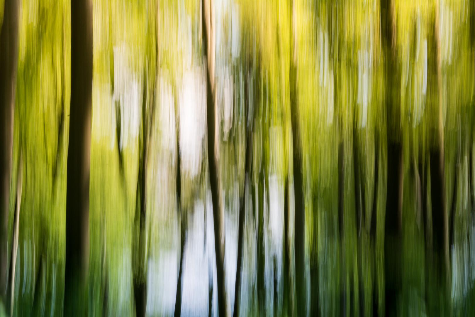 """Wald Malerei"""