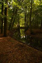 Wald mit Fluss |