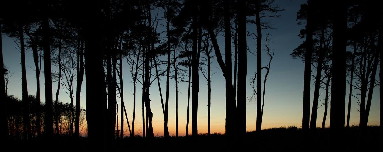Wald mit Meerblick