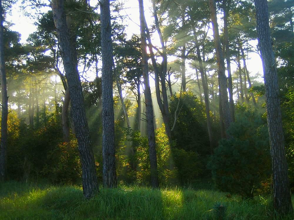 Wald mit Sonnenstrahlen
