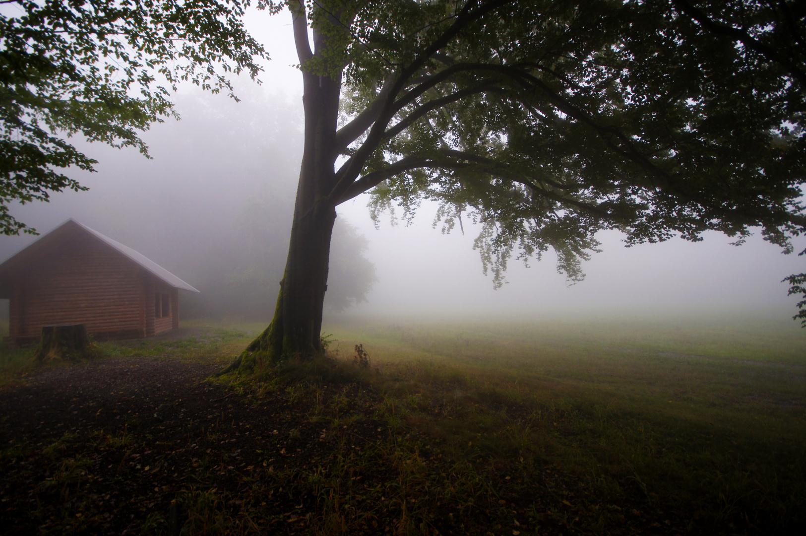 Wald Nebel Thüringer Wald
