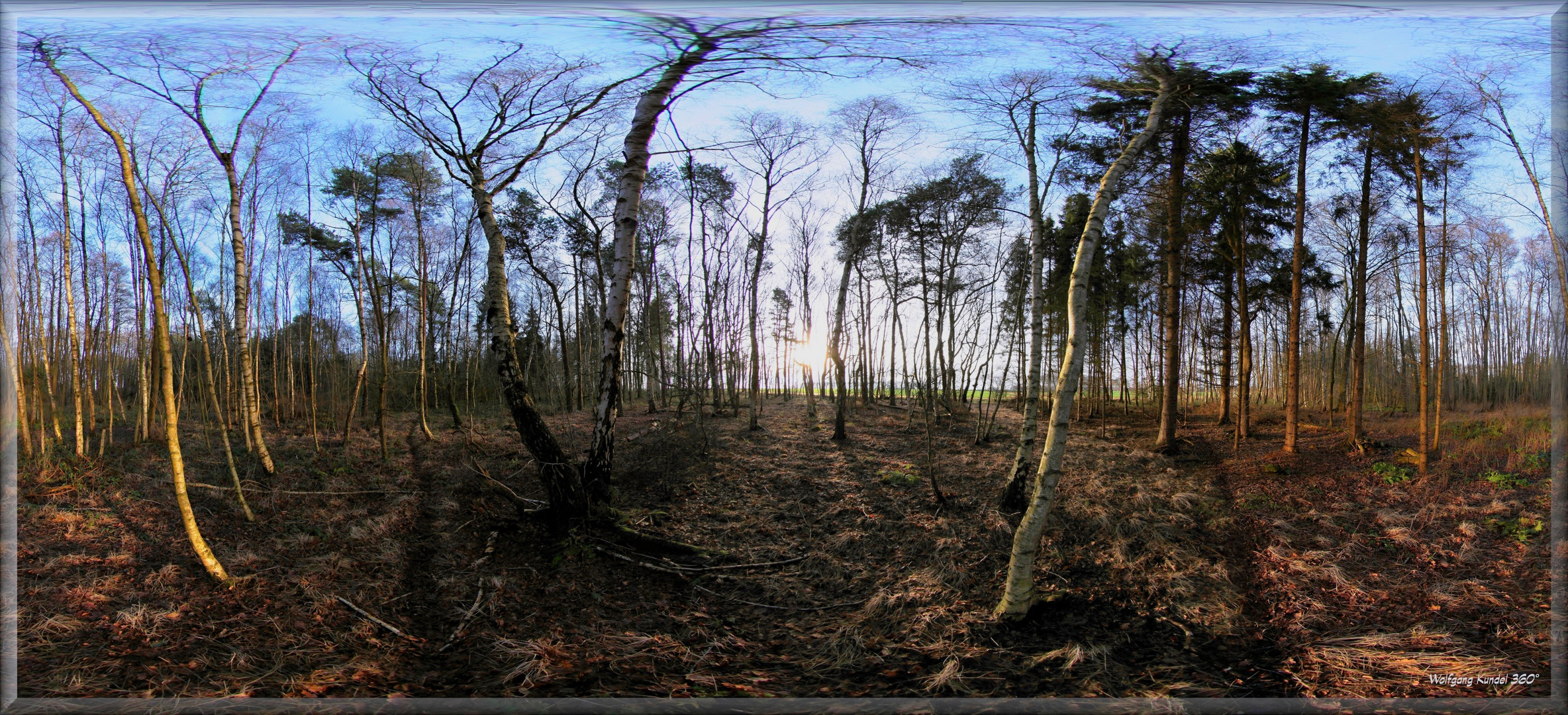 Wald rum - ein Panorama
