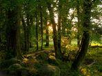 Wald - Sonnenuntergang / Irland - Killarney Nationalpark