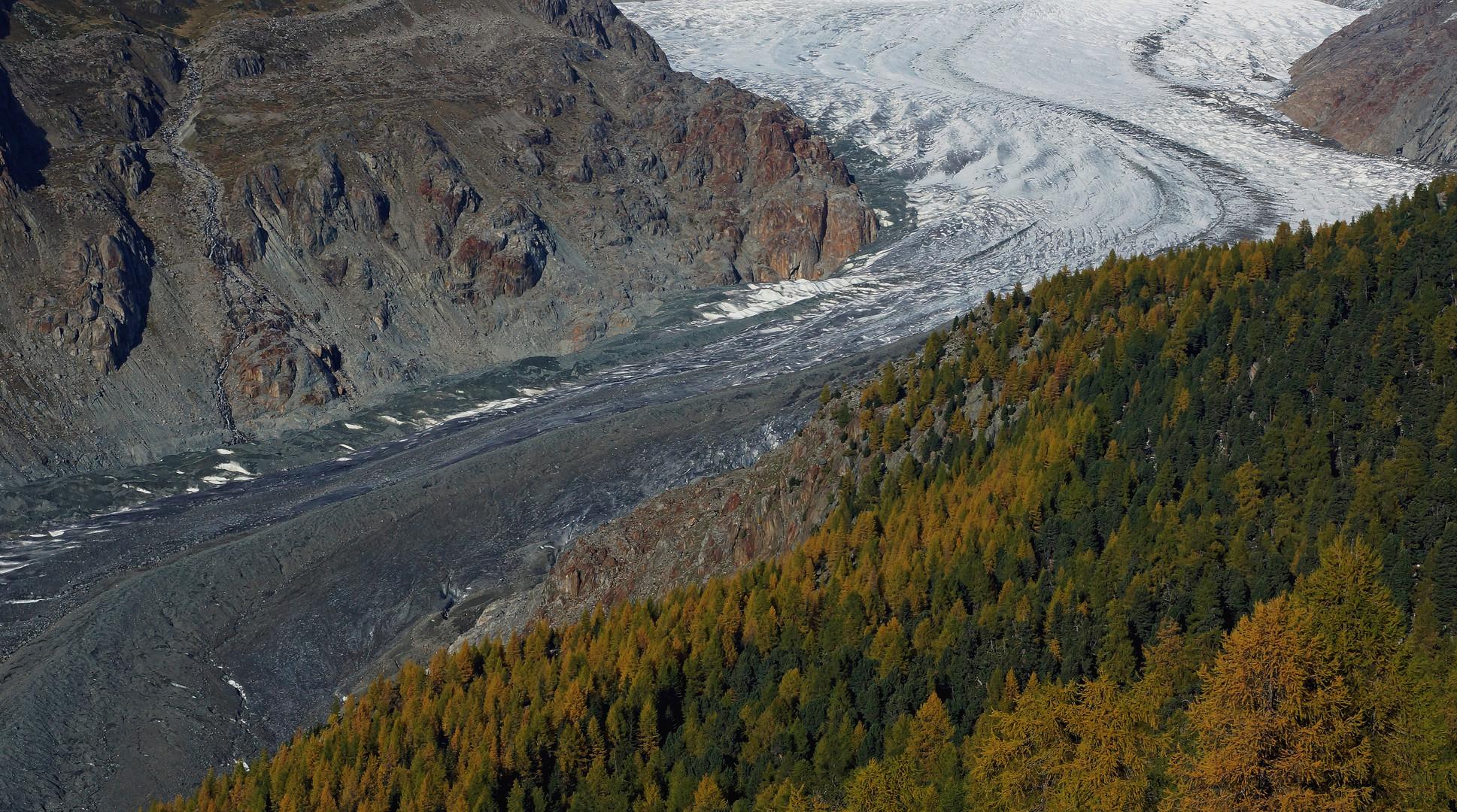 Wald Stein Eis