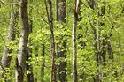 Wald - Tapeten - geeignet